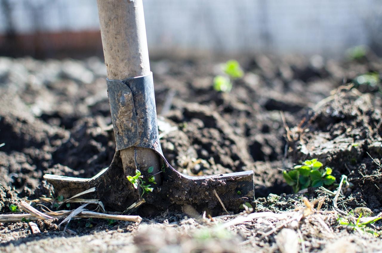 Valg af jord og muld: Sådan vælger du den rette type